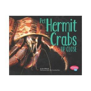 Pet Hermit Crabs Up Close